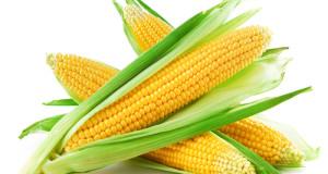 kukurice