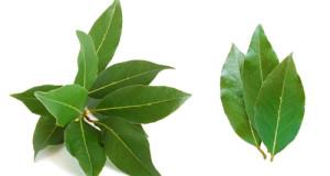 bobkový list
